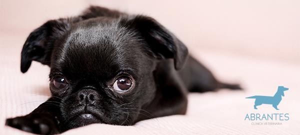 parasitos internos mascotas veterinario carabanchel